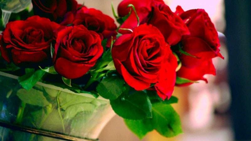 tác dụng cây hoa hồng nhung